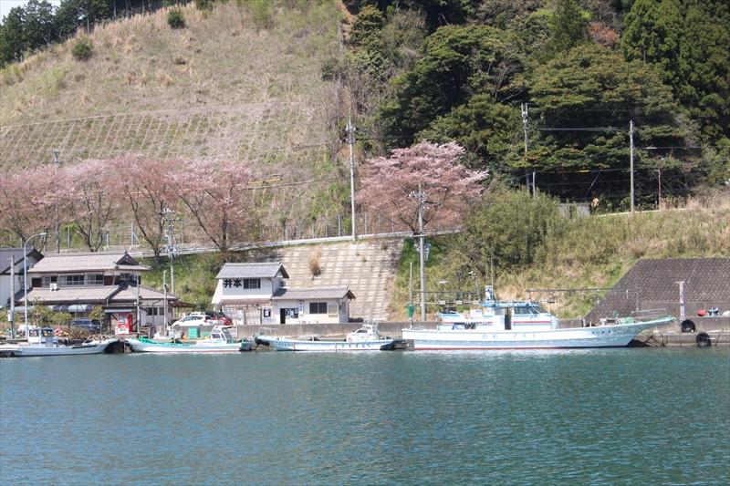 福井県(若狭大島)で船釣り・イカダ釣りなら井本渡船(イモト渡船)
