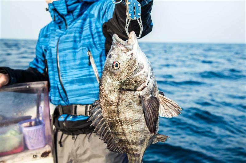 釣果ギャラリー